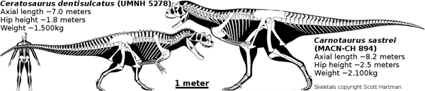 ceratosaurus vs Carnotaurus Facts