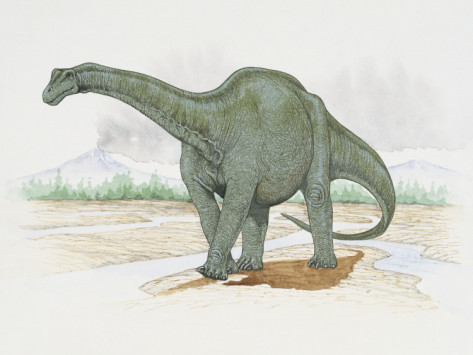 Haplocanthosaurus Facts Sheets