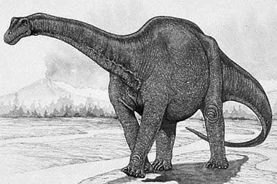 Haplocanthosaurus Facts for Kids
