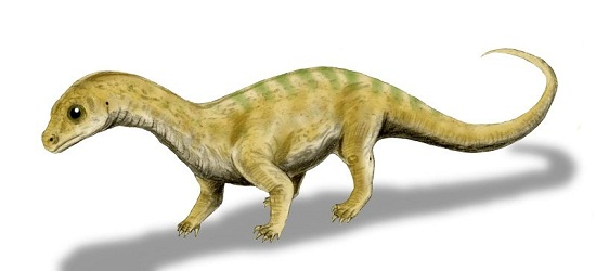 Massospondylus Fact