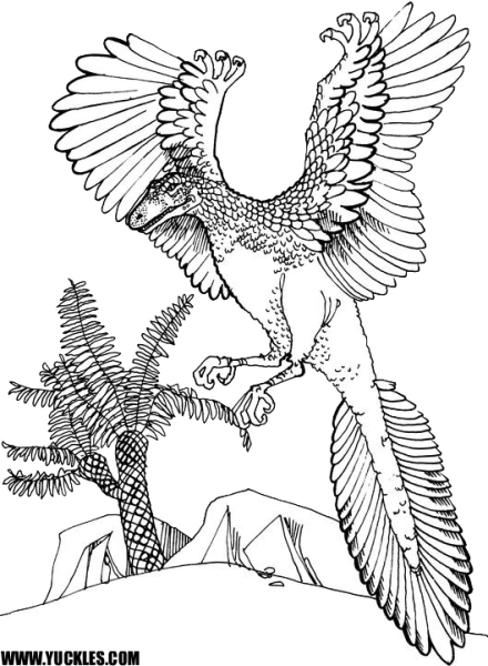 archaeopteryx coloring sheet