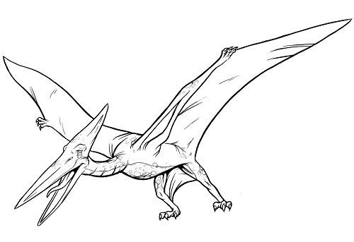 pterodactyl coloring pages - teradactyl dinosaur information dinosaurs pictures and facts