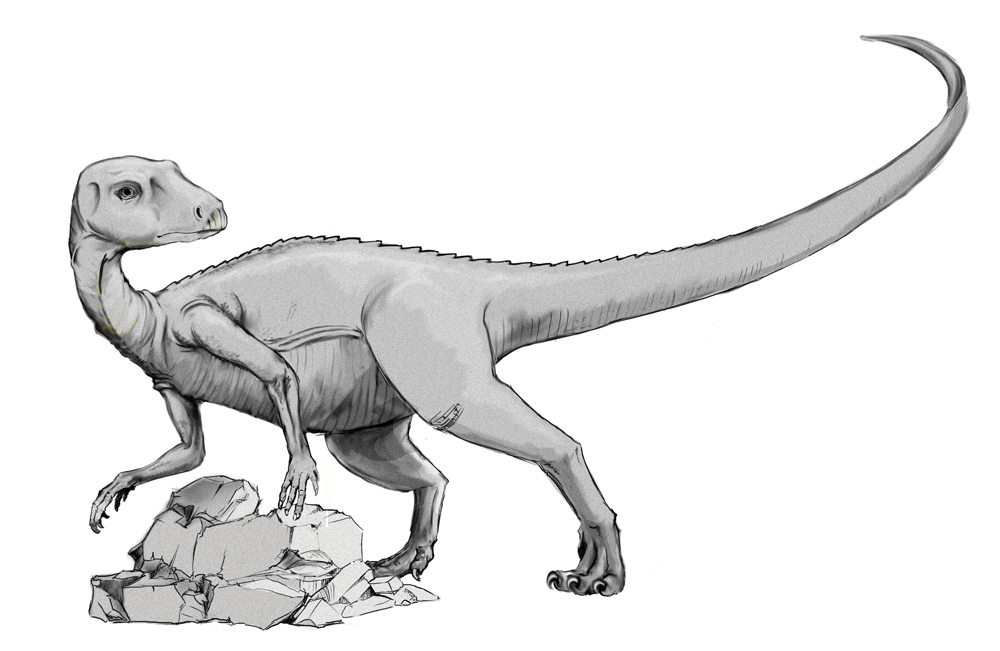 Abrictosaurus Coloring Pages for Kids