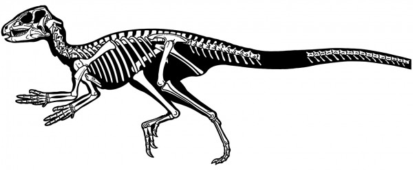 Abrictosaurus Fossils Coloring Sheet