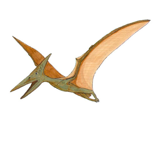 Flying Pteranodon Facts Sheet