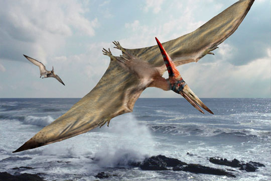 Hunting Pteranodon Facts