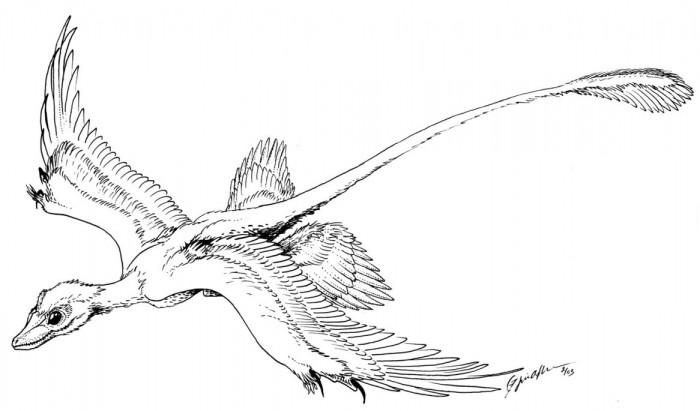 Microraptor Gliding Coloring Pages