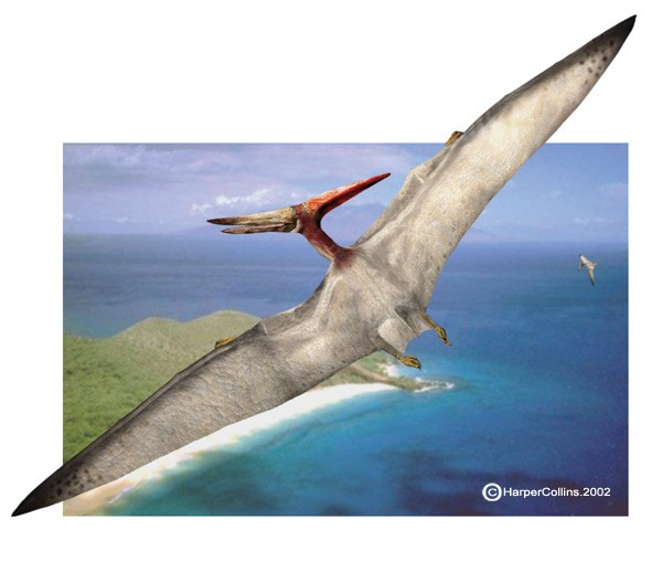 Pteranodon Facts for Kids