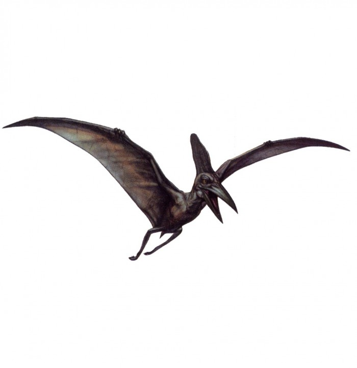 pteranodon interesting facts