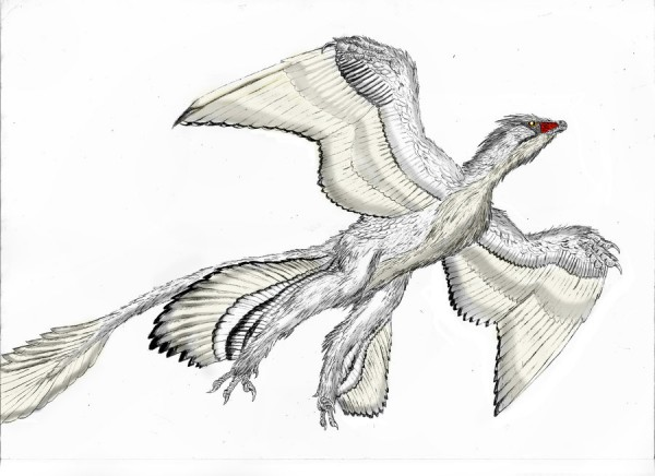 microraptor colouring pages