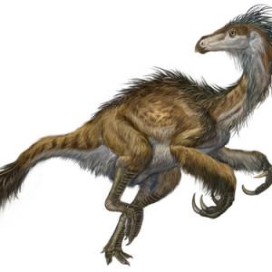 Featherd Dinosaurs – Velociraptor