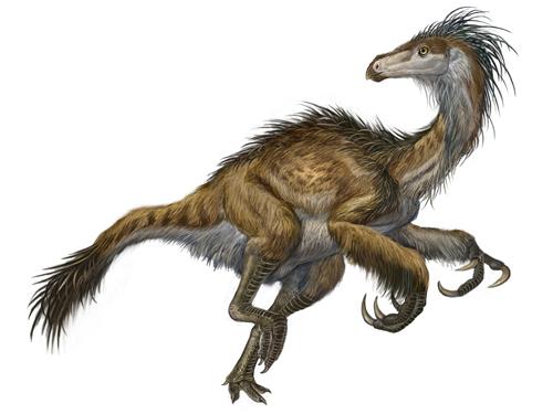Featherd Dinosaurs - Velociraptor