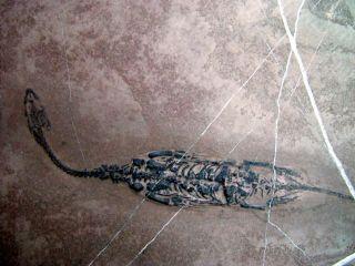 dinosaur fossils california