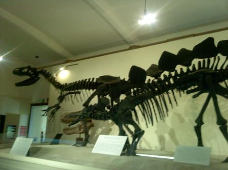 dinosaur fossils for kids