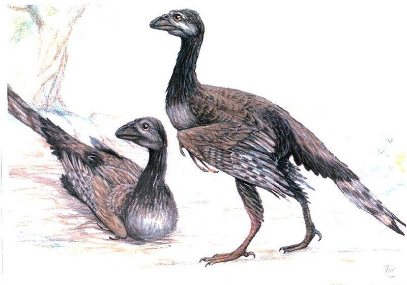 Картинки по запросу Avisaurus