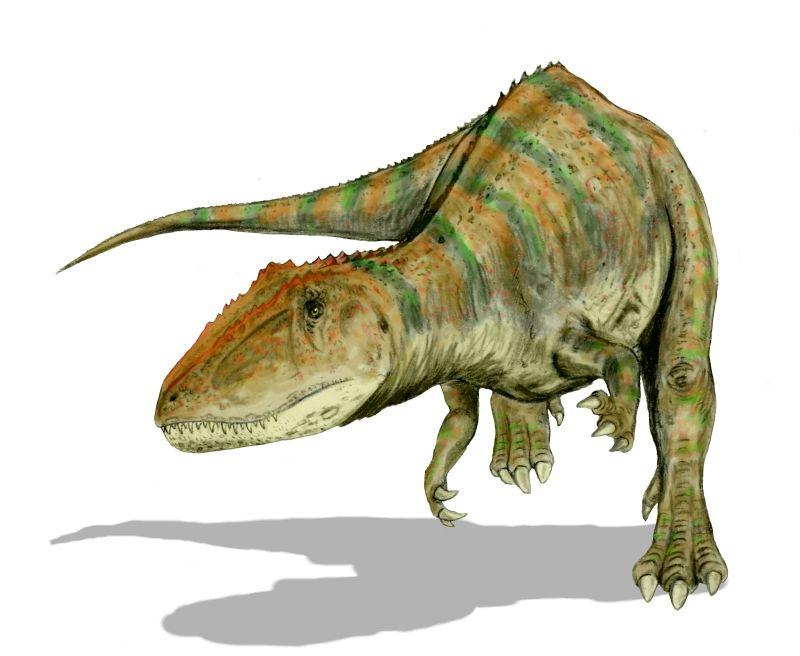 Largest Meat-Eaters Dinosaurs - Carcharodontosaurus saharicus