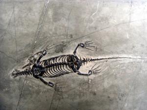 dinosaur fossils in texas
