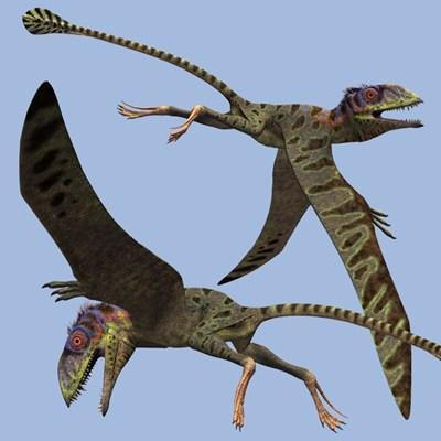 Flying Dinosaurs - Petinosaurus