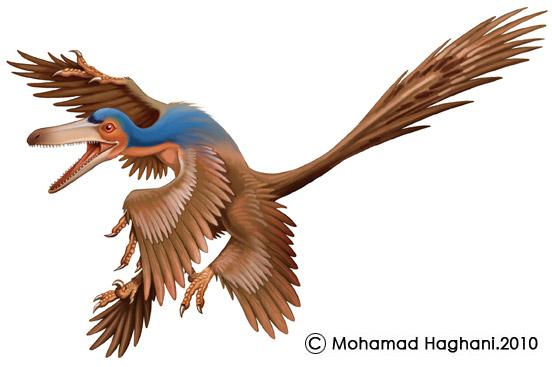 Flying Dinosaurs - Rahonavis