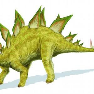 Stegosaurus Facts information