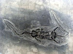dinosaur fossils colorado 2013