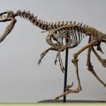 Dinosaur Bones – Velociraptor