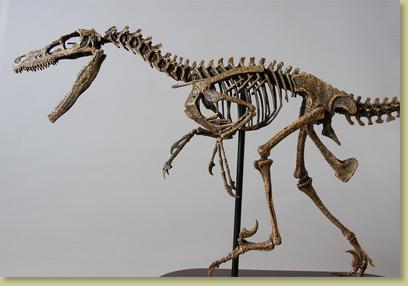 Dinosaur Bones - Velociraptor