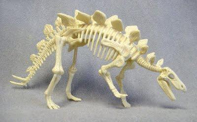 dinosaur bones pictures for kids Stegosaurus