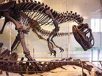 dinosaur bones found in oklahoma