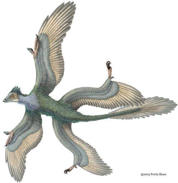 Flying Dinosaurs - Microraptor
