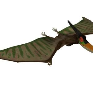 Flying Dinosaurs – Pterosaur