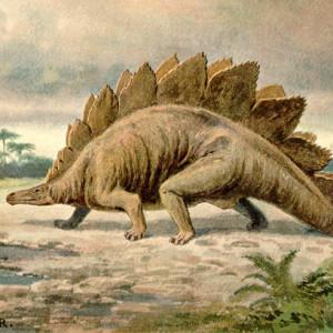 stegosaurus facts for children