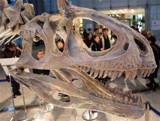 Velociraptor fossils of dinosaurs