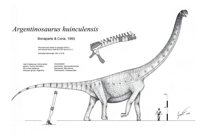 Argentinosaurus, The Largest DInosaurs