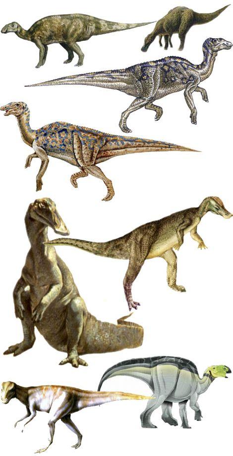Hadrosaurus Taxonomy