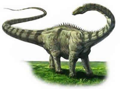 diplodocus fossils facts