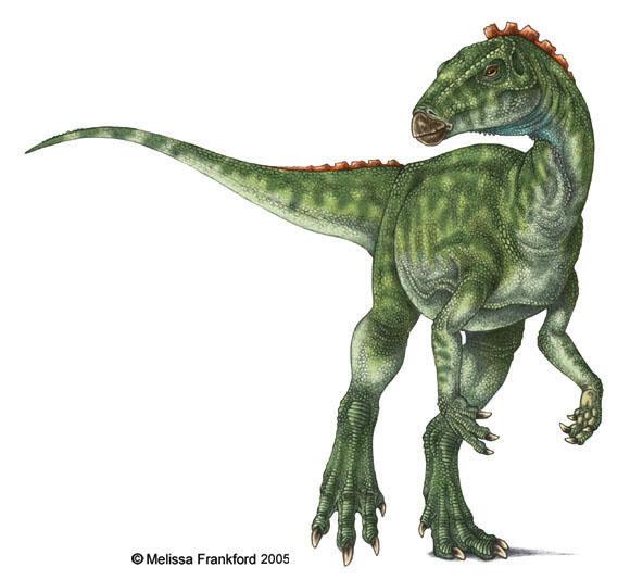 Pics of Dinosaurs – Heterodontosaurus