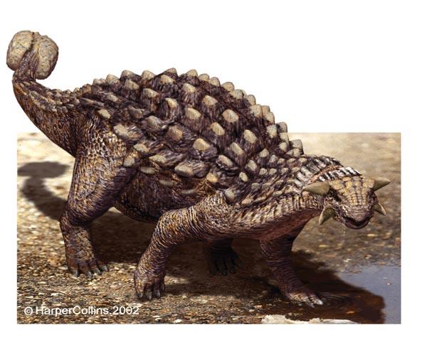 Pics of Dinosaurs – Ankylosaurus