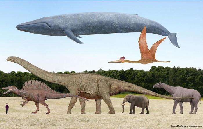 dinosaur fossil fun facts