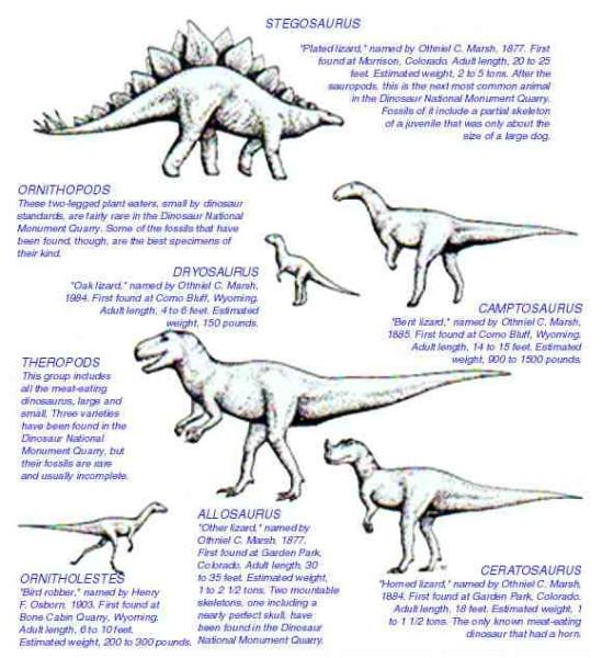 dinosaur information for kids printable