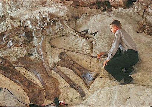 Pictures of Dinosaur Fossils – Brachiosaurus
