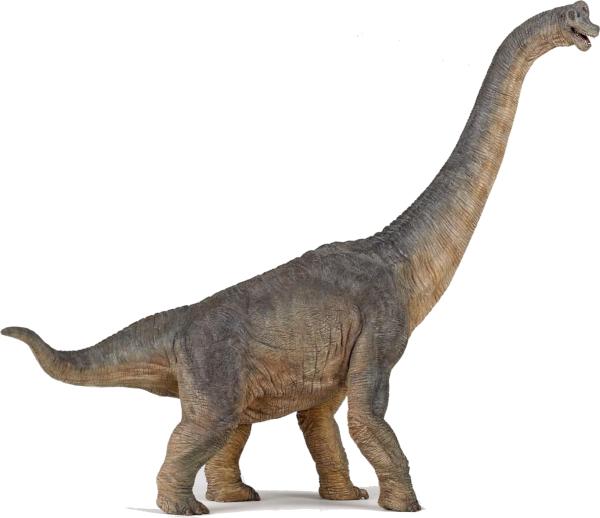 Plant eating dinosaur : Brachiosaurus