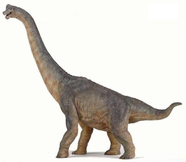 Pics of Dinosaurs – Sauropods – Brachiosaurus