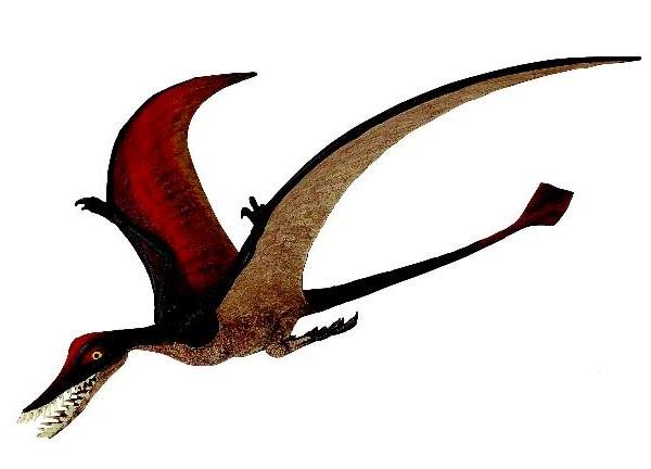 Dinosaurs that Fly : Rhamphorhynchus