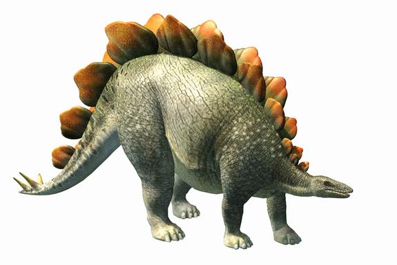 Pics of Dinosaurs – Stegosaurus