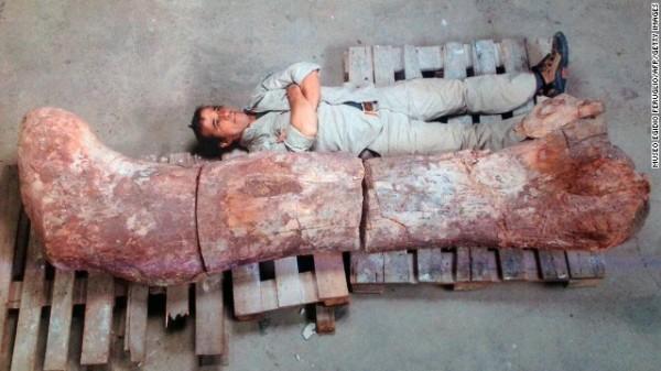 New Dinosaur Discovered : Titanosaurus