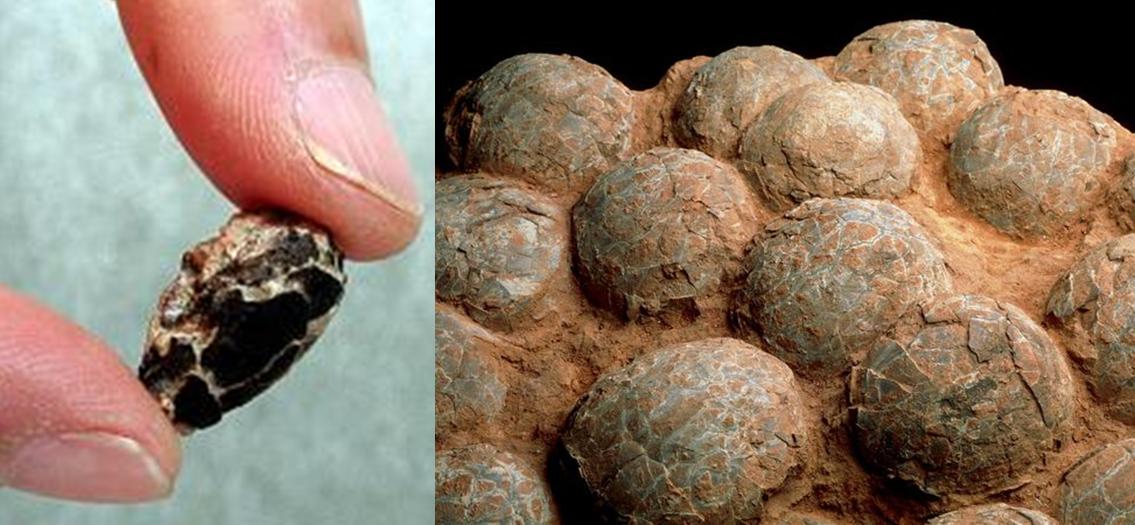 The Smallest Dinosaur Egg