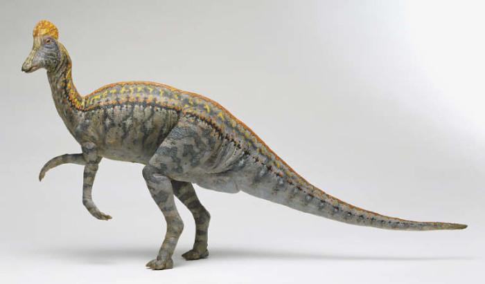 corythosaurus pictures