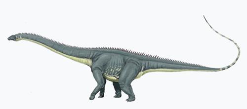 Dinosaur Diplodocus Facts