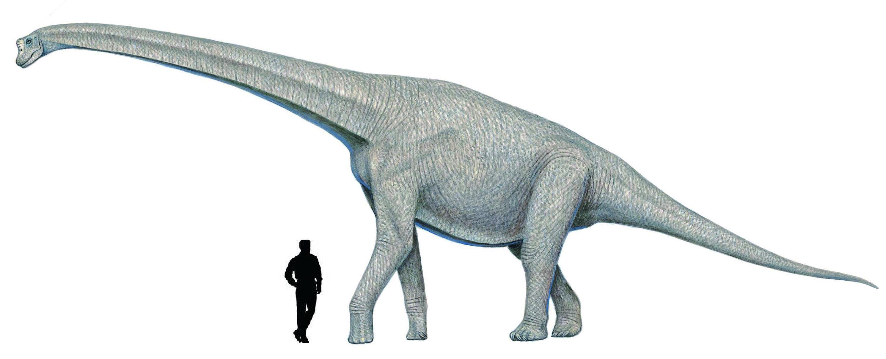 Abrosaurus size